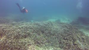 staghorn coral, flinders reef, brisbane, qld, australia - 8-2013